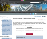 Backcross Breeding 2 - The Backcrossing Process