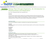Energy Flow through Organisms: An Introduction to Photosynthesis and Respiration