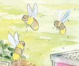 Bee A Friend To Pollinators Video Link