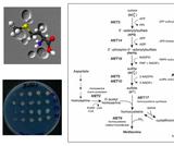 Genetic analysis of yeast strains
