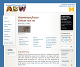 Aconaemys fuscus: Information