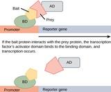Biology, Genetics, Biotechnology and Genomics, Genomics and Proteomics