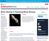 Brine Shrimp 1: Hatching Brine Shrimp