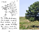 Biology, Evolutionary Processes, Phylogenies and the History of Life, Perspectives on the Phylogenetic Tree