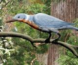 Biology, Biological Diversity, Vertebrates, Birds