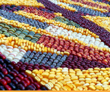 Genetics, Agriculture, and Biotechnology