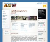 Agkistrodon piscivorus: Information