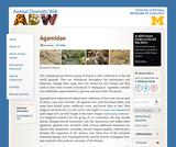Agamidae: Information