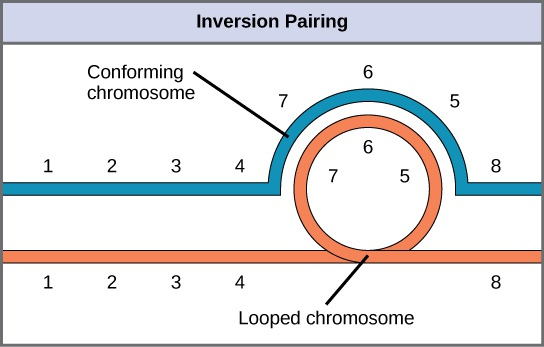 Chromosomal Basis of Inherited Disorders