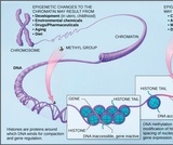 Biology, Genetics, Gene Expression, Eukaryotic Epigenetic Gene Regulation