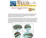 Adaptations That Help Gray Whales Survive