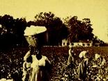 The Economics of Cotton