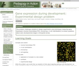 Gene Expression During Development: Experimental Design Problem