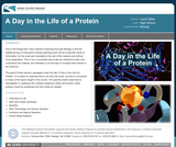 A Day in the Life of a Protein