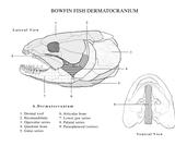 Biology 351 Anatomical Illustrations