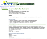 Investigation of a Mealworm
