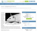 Highlighting the Neuron