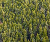 PEI SOLS: 5th grade Forests: Ecosystem Benefits
