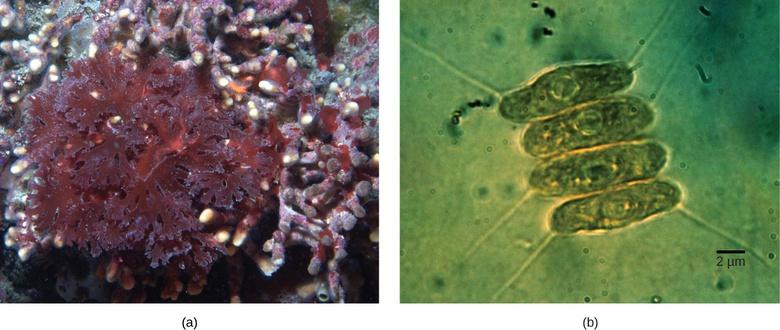 Eukaryotic Origins