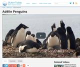 AdÃlie Penguins