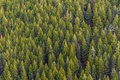 PEI SOLS HS Forests: Carbon Sequestration