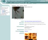 Daphnia anterior end