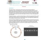 Mitochondrial Control Region