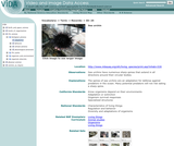 Sea urchin spines