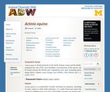 Actinia equina: Information
