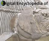 Digital Encyclopedia of Ancient Life (DEAL)