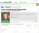 Antlers and Mammalian Regeneration