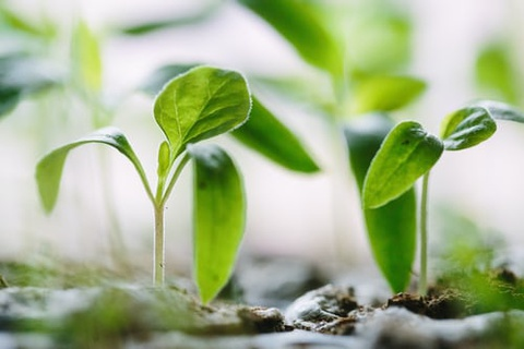 Seed to Tree Unit: Grade 5 Elementary Science and Integrated Subjects