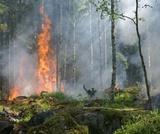 PEI SOLS 3rd grade Fire: Wildfire in Washington (Spanish)