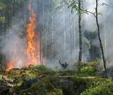 PEI SOLS Kindergarten Fire: Humans and Wildfire (Spanish)