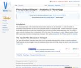 Phospholipid Bilayer - Anatomy & Physiology