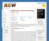 Agkistrodon contortrix laticinctus: Information