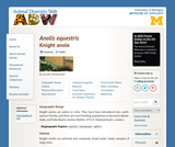 Anolis equestris: Information