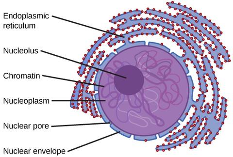 Eukaryotic Cells