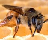 Example Bee Lessson