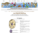 Cell Organelle Matching