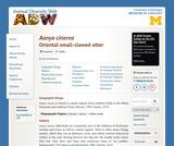 Amblonyx cinereus: Information