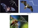 Determining Evolutionary Relationships