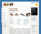 Actinopterygii: Information