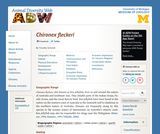 Chironex fleckeri: Information
