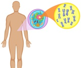 Genetic Disorder Research/PowerPoint Slide Project