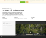 Wolves of Yellowstone