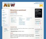 Bassariscus sumichrasti: Information