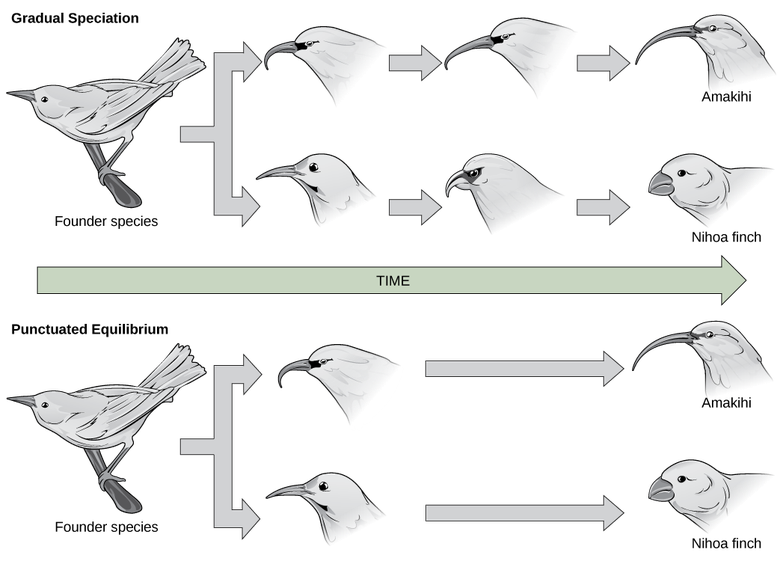 Reconnection and Rates of Speciation