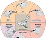 Biology, Evolutionary Processes, Evolution and the Origin of Species, Formation of New Species