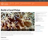 Build a Coral Polyp